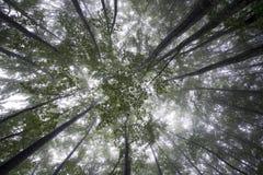 Cielo de los árboles Imagen de archivo