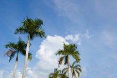 Cielo de los againts de la palma Imagen de archivo libre de regalías