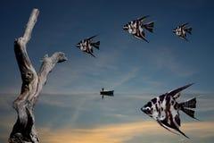 Cielo de los pescados Foto de archivo libre de regalías