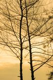 cielo de oro del árbol romántico Fotos de archivo libres de regalías
