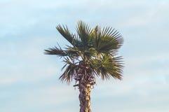 Cielo dei tropici della palma immagine stock libera da diritti