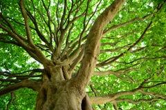 Cielo del árbol Imagenes de archivo