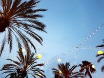 Cielo del amanecer con las luces 4k de las palmas Fotografía de archivo