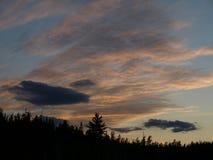 Cielo del bosque Imagen de archivo libre de regalías