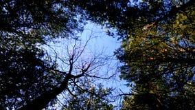 Cielo del bosque Foto de archivo libre de regalías