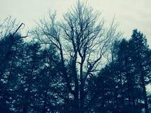 Cielo del bosque Fotografía de archivo
