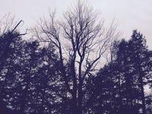 Cielo del bosque Fotografía de archivo libre de regalías
