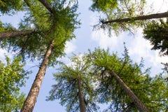 Cielo del bosque Fotos de archivo