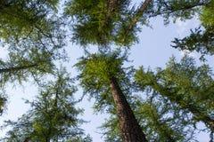 Cielo del bosque Fotos de archivo libres de regalías