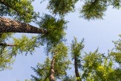 Cielo del bosque Imagenes de archivo
