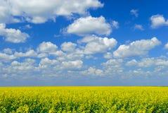 Cielo del campo di Canola Fotografia Stock