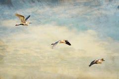 Cielo del Egret di Snowy con struttura di Grunge Immagine Stock