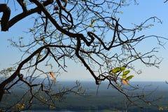 Cielo del fondo degli alberi Fotografia Stock
