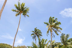 Cielo del fondo della noce di cocco Fotografie Stock Libere da Diritti