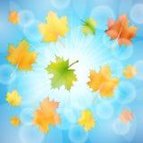 Cielo del fondo di autunno Fotografia Stock Libera da Diritti