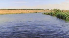 Cielo del giunco della riva del lago stock footage