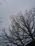 Cielo del invierno Foto de archivo libre de regalías