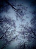 Cielo del invierno Imagen de archivo libre de regalías