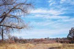 Cielo del invierno en el parque de estado del pueblo del lago, Colorado Fotos de archivo libres de regalías