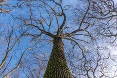 Cielo del invierno en parque de la ciudad Foto de archivo libre de regalías