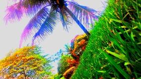 Cielo del jardín de Coqueiro Imagenes de archivo