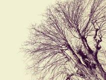 Cielo del nel de Rami fotos de archivo