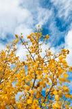 Cielo del otoño Fotografía de archivo