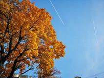 Cielo del otoño sobre nosotros imagenes de archivo