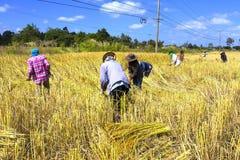 Cielo del raccolto del gruppo dell'agricoltore Immagine Stock Libera da Diritti