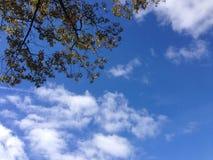 Cielo del roble Imagen de archivo libre de regalías