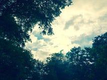 Cielo del tacto de las hojas para propia fuerza Imagen de archivo libre de regalías