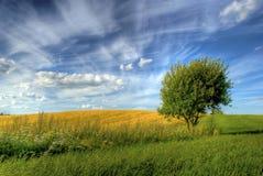 Cielo del verano foto de archivo libre de regalías