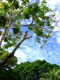 Cielo dell'albero Fotografia Stock