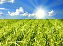 cielo dell'erba Immagine Stock Libera da Diritti