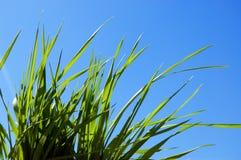 cielo dell'erba Fotografie Stock