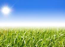 cielo dell'erba Fotografie Stock Libere da Diritti