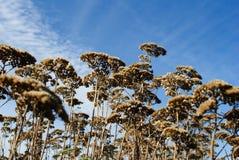 Cielo dell'erba asciutta Immagini Stock