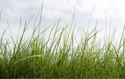 cielo dell'erba della priorità bassa Immagine Stock Libera da Diritti