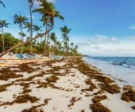 Cielo dell'oceano della palma Fotografia Stock Libera da Diritti