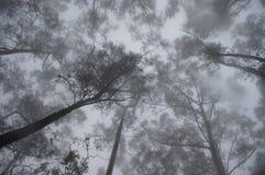 Cielo della foresta nebbiosa misteriosa Fotografia Stock Libera da Diritti