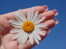 Cielo della mano del fiore Immagini Stock Libere da Diritti