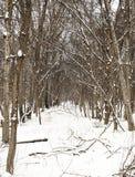 Cielo della neve Immagine Stock