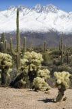 Cielo della neve ed inferno del deserto fotografie stock