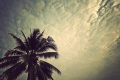 Cielo della noce di cocco Fotografie Stock Libere da Diritti