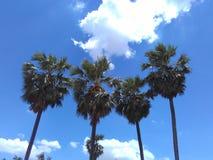 Cielo della noce di cocco Fotografia Stock Libera da Diritti
