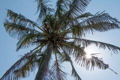 Cielo della palma Fotografia Stock