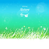 Cielo della primavera con la struttura dell'erba per il vostro testo Immagine Stock