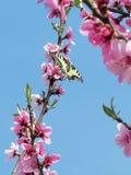 Cielo della primavera fotografia stock libera da diritti