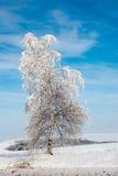 Cielo della priorità bassa della betulla di gelo Immagine Stock
