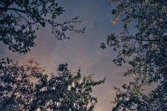 Cielo della stella di notte Immagini Stock Libere da Diritti